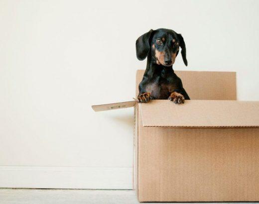Wat brengt een verhuisbedrijf in rekening? hondje