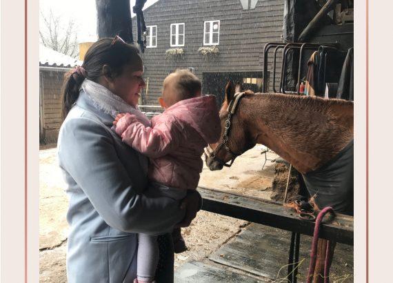10 favorieten paard kijken