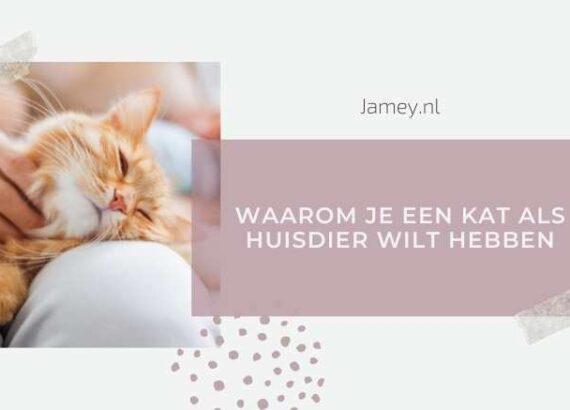 Waarom je een kat als huisdier wilt hebben