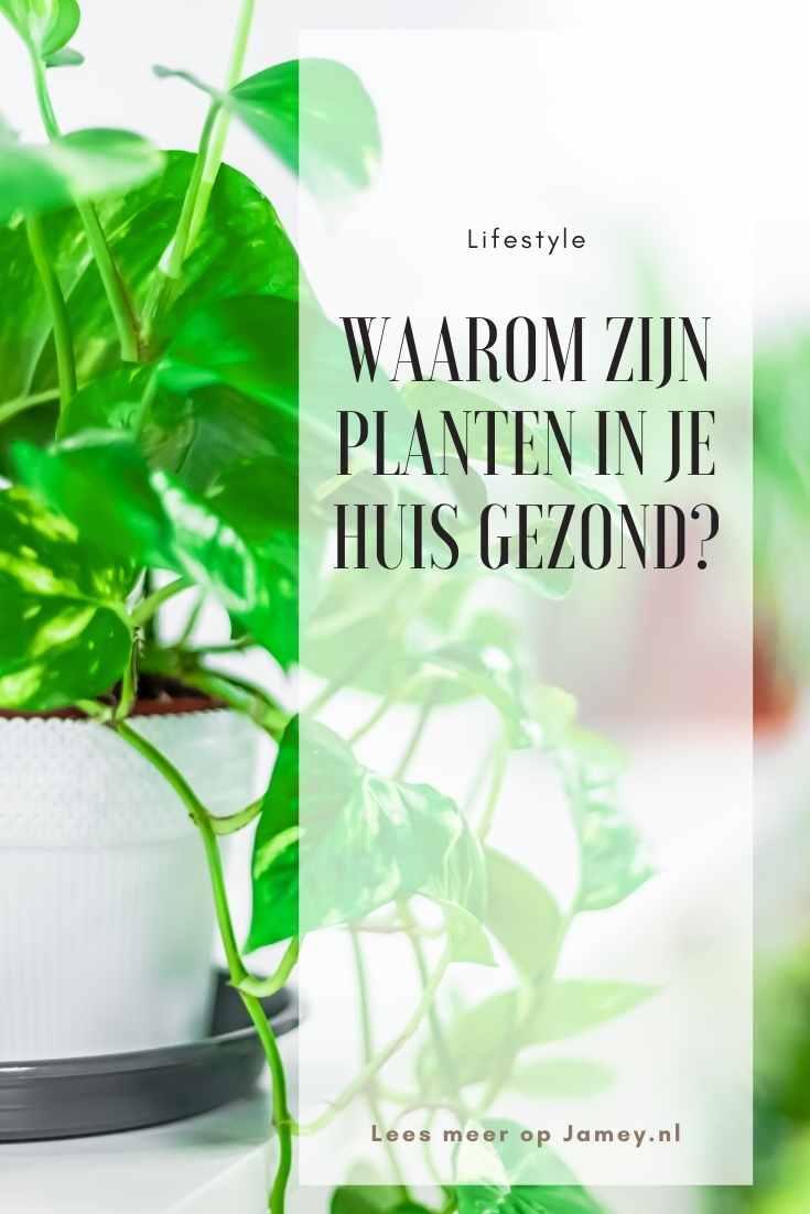 Waarom zijn planten in je huis gezond?-2