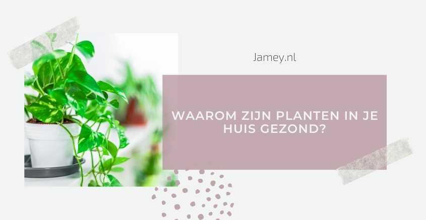 Waarom zijn planten in je huis gezond?